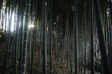 竹林 © Shunji Yoshimi