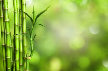 Many bamboo stalks  on background © BillionPhotos.com