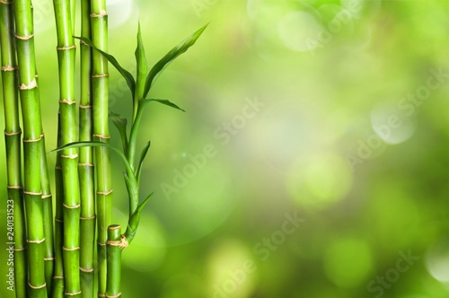 Foto Murales Many bamboo stalks  on background