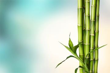Many bamboo stalks on white background © BillionPhotos.com