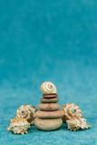 seashells on a blue background - 240163146