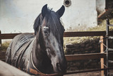 Photo of a beautiful horse in a farm, in Sintra, portugal