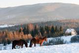 Horses in Kalnica, Bieszczady Mountains, Carpathians Mountains, Poland