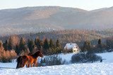 Horses in Kalnica, Bieszczady Mountains, Carpathians Mountains, Poland © Maciej