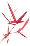 bambou rouge, fond blanc