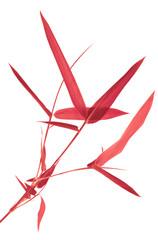 bambou rouge, fond blanc © Unclesam