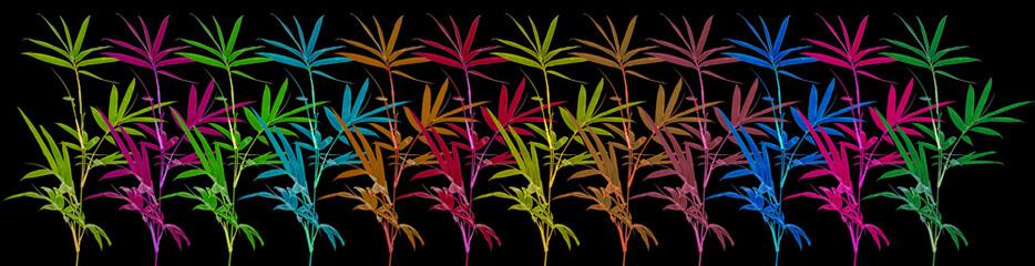 bambous couleurs, fond noir