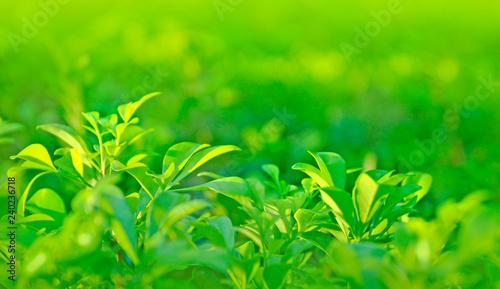 Leinwandbild Motiv green leaves on blurred background
