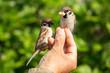 Leinwanddruck Bild - Vögel füttern mit der Hand