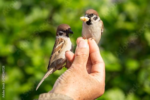 Leinwandbild Motiv Vögel füttern mit der Hand
