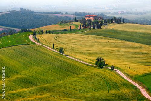Zdjęcia na płótnie, fototapety na wymiar, obrazy na ścianę : Wonderful misty Tuscany landscape with curved road and cypresses, Italy