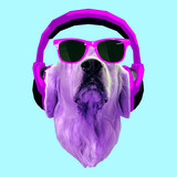 Contemporary art collage. Dog in headphones and sunglasses. Dj party style - 240280720