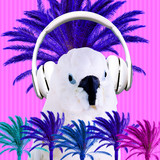 Contemporary art collage. Music concept.Parrot DJ. Tropical mood - 240280725