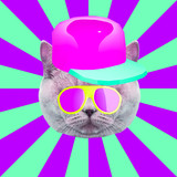 Contemporary art collage. Hipster cat in a 3 d cap and sunglasses. Minimal fun art - 240280736