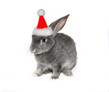 Christmas rabbit in the hat of Santa Claus on a white background