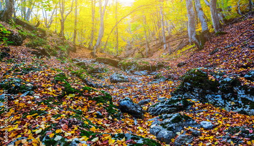 beautiful autumn forest at the sunny day