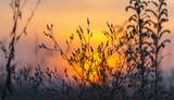 defocusing, field grass at sunset © donikz