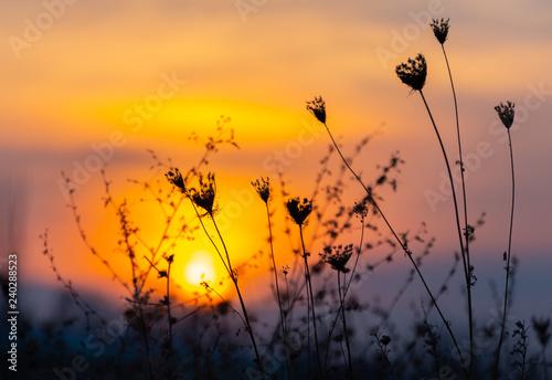 obraz lub plakat defocusing, field grass at sunset