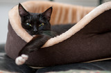 cat is resting in the cat bed