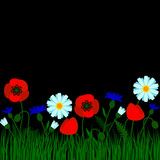 Horizontal border with field flowers isolated on black. Vector illustration. Summer flowers design.