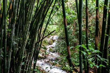 Bambus am Abhange eines Flusslaufs - Thailand
