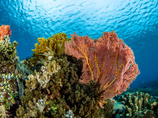 Underwater Corals of the Sea
