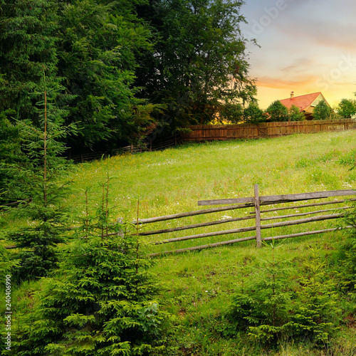 Slopes of the mountains, beautiful spruce and a bright sunset. Rural landscape.