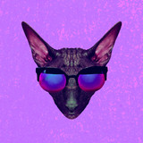 Contemporary art collage. Glamor cat in stylish sunglasses - 240418331