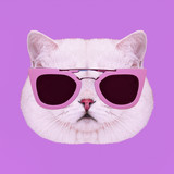 Contemporary art collage. Glamor white kitty in stylish sunglasses - 240418334