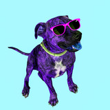 Contemporary art collage. Dog in sunglasses. Colours art - 240418345
