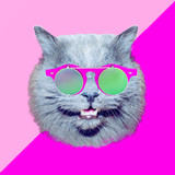 Contemporary art collage.  Cat in stylish vintage sunglasses. Minimal fun art - 240418376