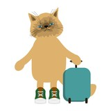nice cat travelling with suitcase in white isolated