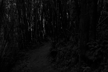 Schwarz Weiße Struktur eines Bambuswald © marc