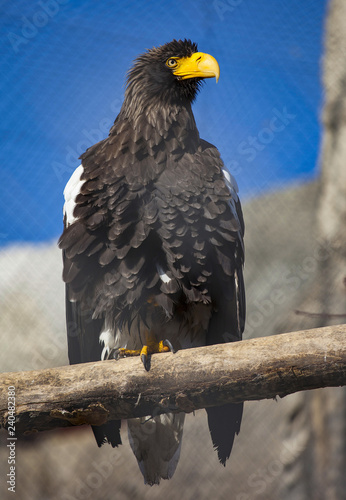 Bird Of Prey Yellow Beak 2