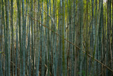 Green stems of bamboo forest © Picture Partners