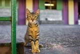 Beautiful cute cat on the street wild homeless