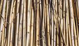 Fundo com bambu seco
