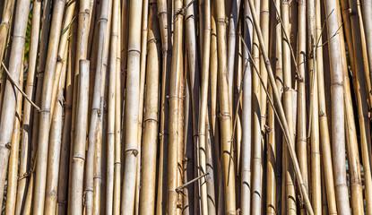 Fundo com bambu seco © JCLobo