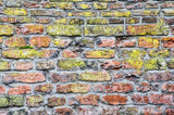 Old brick wall with grey mortar and various shades of red and brown and with a bright green lichen-like layer