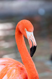 Beautiful pink flamingo