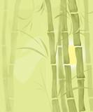 Bamboo illustration plant nature garden illustration