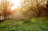 winter foggy landscape © MIGUEL GARCIA SAAVED
