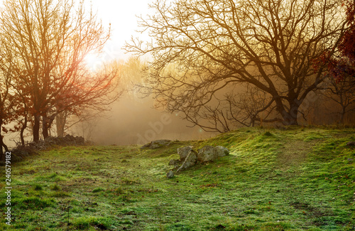 winter foggy landscape - 240579182
