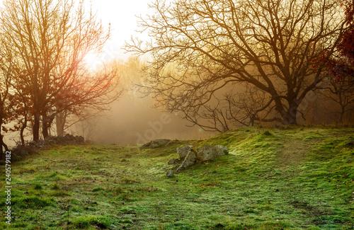 winter foggy landscape - 240579182
