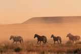 Wild horses at Sunset in the Desert © natureguy