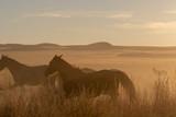 Wild horses at Sunset in the Desert