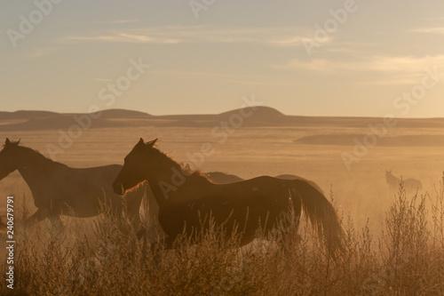 Wild horses at Sunset in the Desert - 240679791
