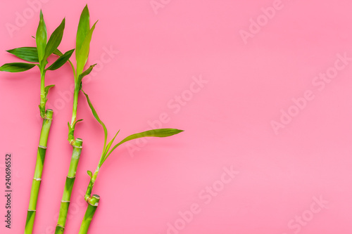 Bamboo shoot. Bamboo stem and leaves on pink background top view copy space