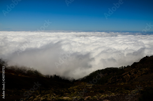 High Clouds over Pine Cone Trees Forest - 240700753