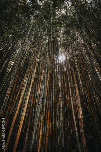 Sun breaks through dense bamboo forest